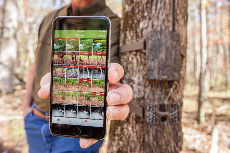 Cellular wireless trail camera