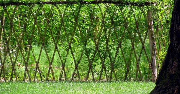 Live Willow Garden Fence